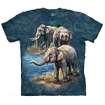 Asian Elephants - 10-5979 - Adult Tshirt